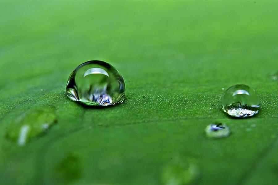 by Sengkiu Pasaribu - Nature Up Close Water
