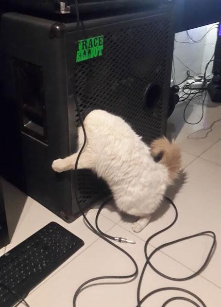 Sıkışan Kediler