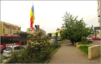Photo: Turda - Piața Romană, Photinia - 2019.05.16