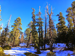 Photo: Cougar Crest Trail