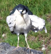 Photo: Flipping me the bird!