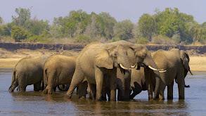 Elephant Valley thumbnail