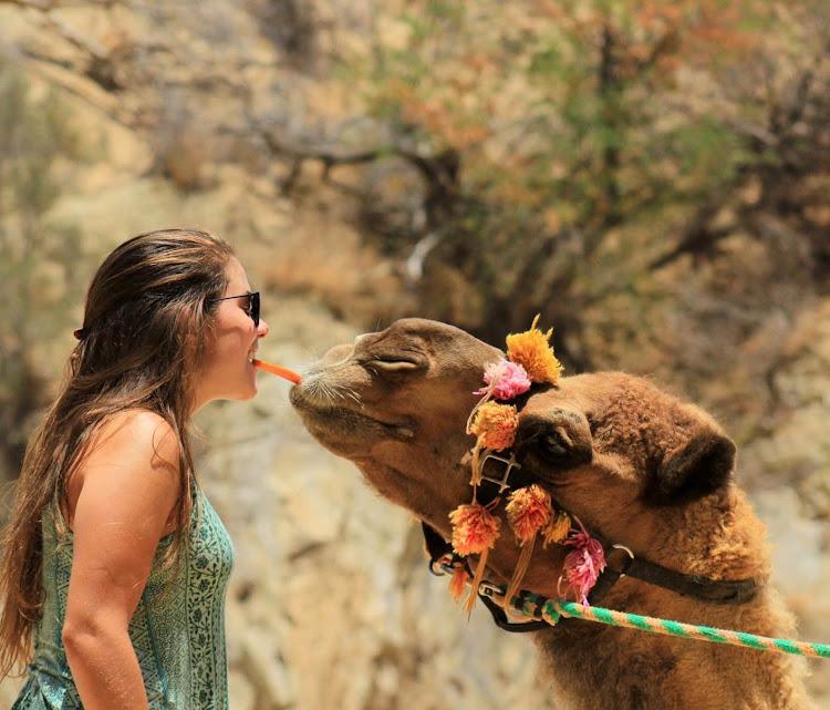 Getting friendly: Feeding carrots to a camel.