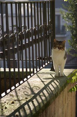 gatto di ringhiera di i1rsv