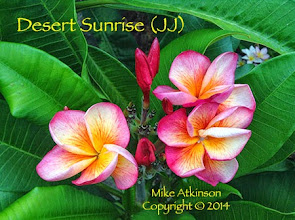 Photo: Desert Sunrise (JJ)