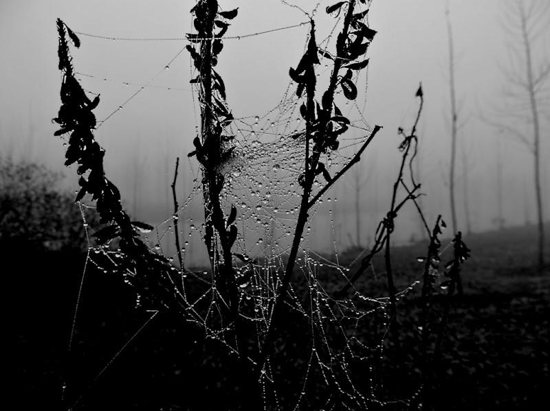 Golena del Po in inverno di ayrton73