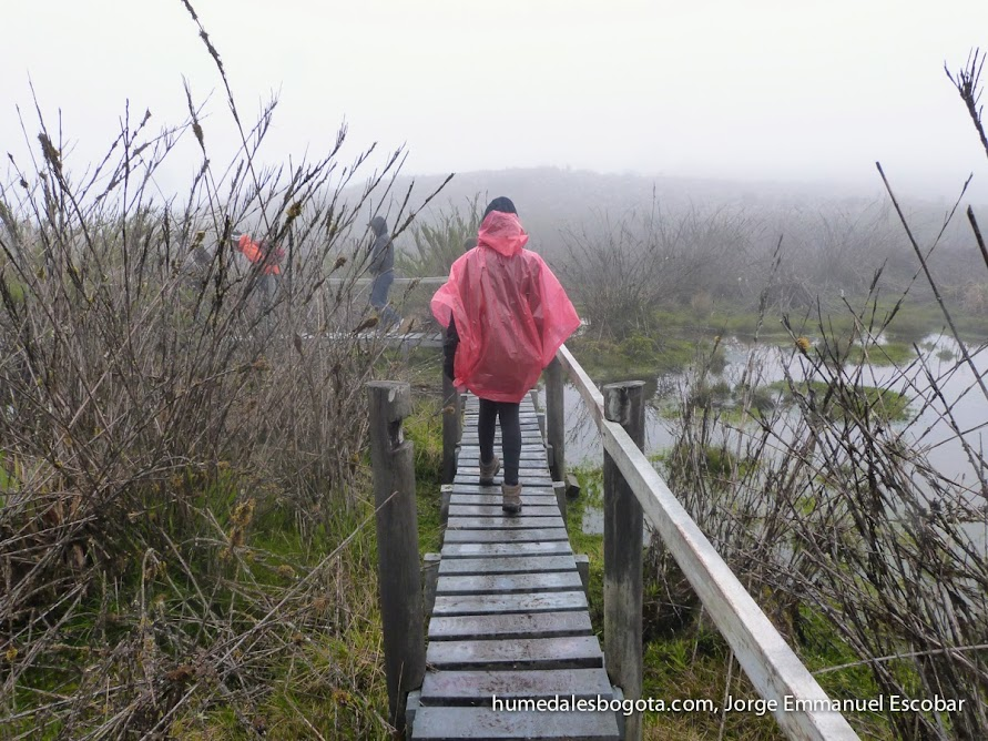 Senderos de Laguna seca en el Páramo de Chingaza