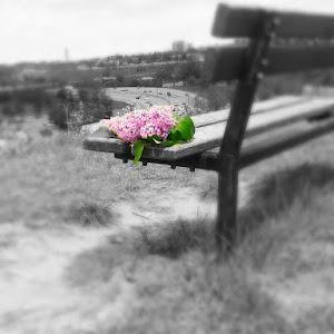 Lilac park bench.jpg