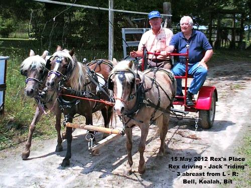3 abreast hitch at Rex McArthur's Farm