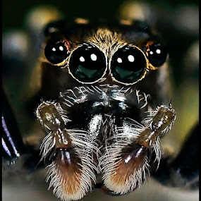 by Madihi Ata - Animals Insects & Spiders