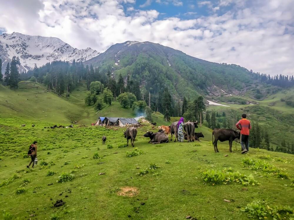 bhunbhuni+shepherds+ kalga parvati+valley