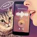 Translator for cats Simulator icon