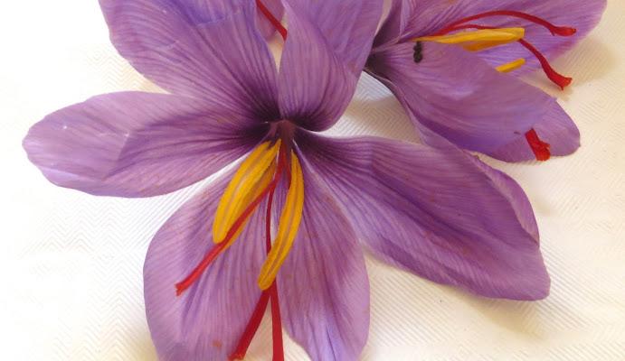 Il colore viola di sayseb