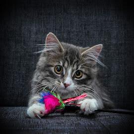 by Jane Bjerkli - Animals - Cats Kittens