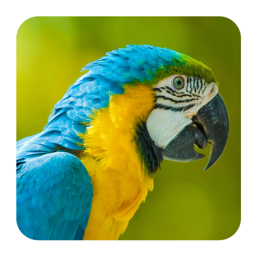 Bird Sounds - Apps on Google Play