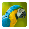 com.androbaby.birdsounds
