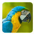Bird Sounds apk