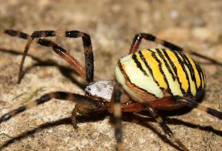 Photo: pavouk 2010