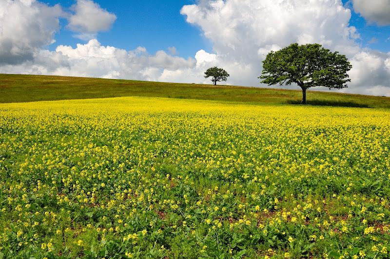tarda primavera di Luporosso