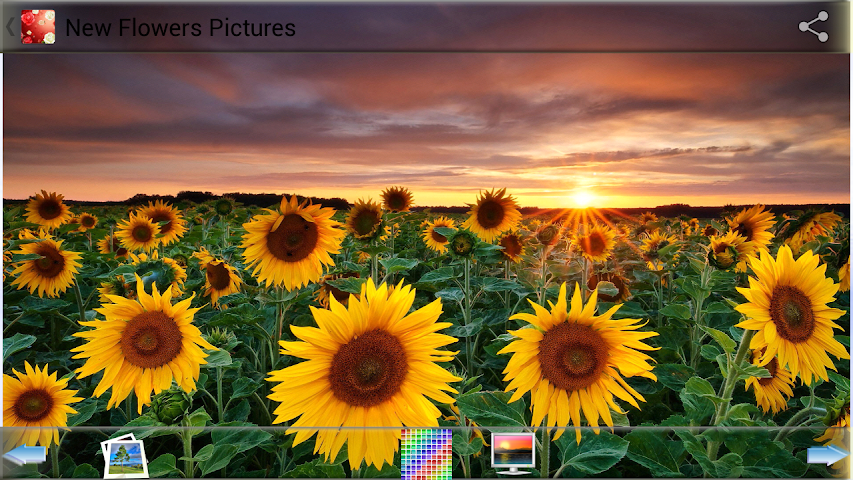 android New Flowers Pictures Screenshot 3
