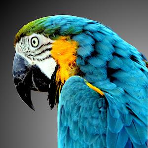 1-Parrot 001.jpg
