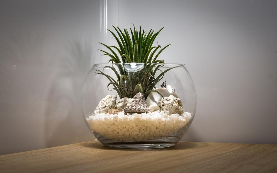An air plant with shells and rocks in a terrarium