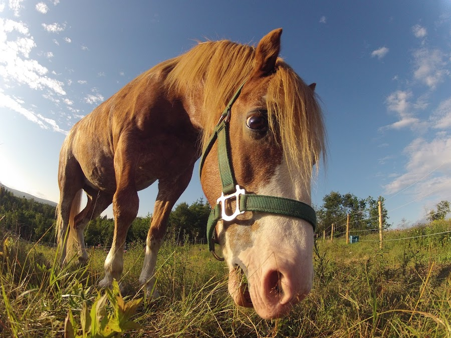 Ground Perspective  by Eric Wiese - Animals Horses ( athletics, canada, grass, horse, funny, sky, riding, food, sunset, summer, perspective, view, animal )