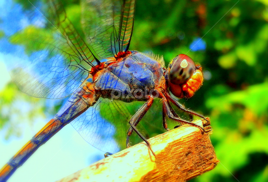 Colours of nature by Tanvir Patel - Instagram & Mobile Android ( insect, mobile,  )