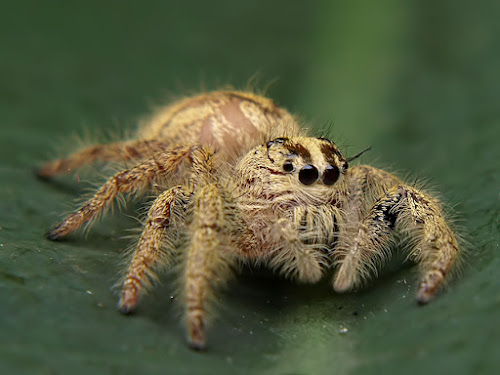 SPIDER by Deddy Setiawan - Animals Insects & Spiders