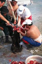 Photo: 03335 ナムジ家/ヤギ石焼料理準備/ボードック/首から下の皮を筒状に剥いだ中に解体した肉と焼石を詰めもどして、外側から火で焼く
