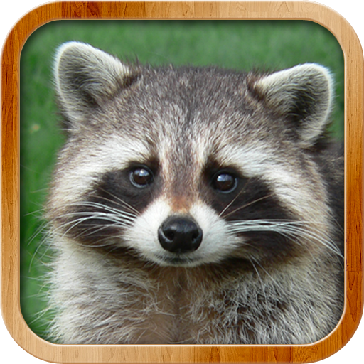 Kids Learn About Animals (app)