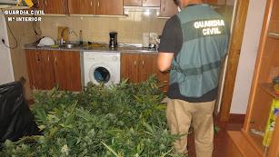 Agente incautando la Marihuana / Comandancia de la Guardia Civil