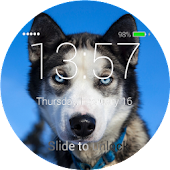 Husky Lock Screen
