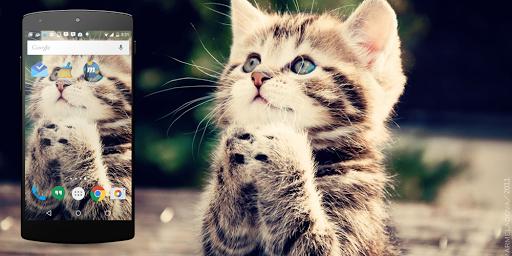 可愛的貓咪生活壁紙