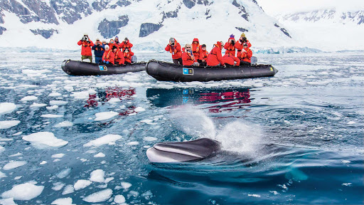 Guests on a Lindblad Expeditions tour spot a minke whale in Paradise Bay, Antarctica.