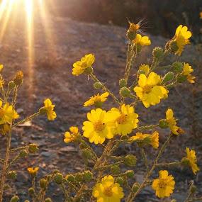 by Anna Heaslett - Flowers Flowers in the Wild