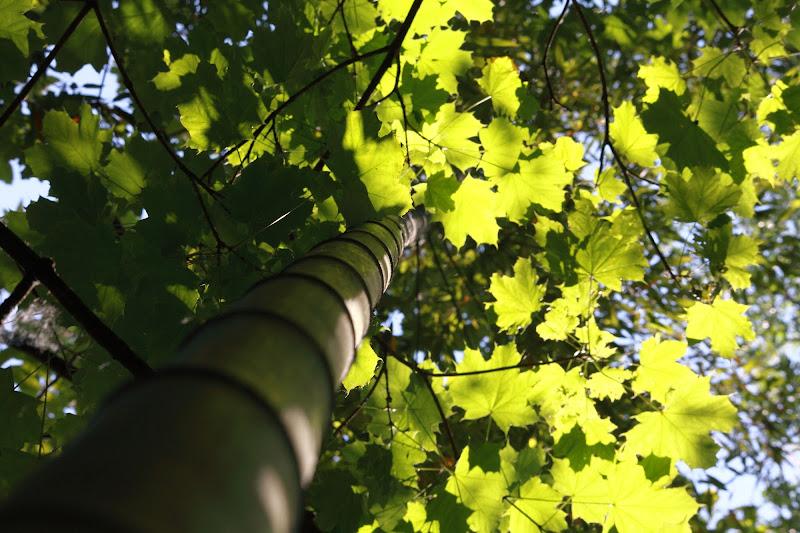 La bellezza del Bambù di Devil1200S4V