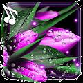 Tulips Dew Drops LWP APK