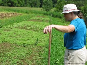 Photo: Nancy Hayden, resident bee keeper at The Farm Between, examines plots.