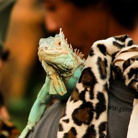by Agus Aktawan - Animals Reptiles