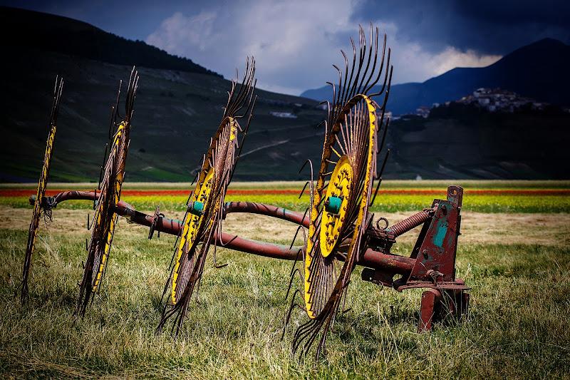 Quattro ruote di Tindara