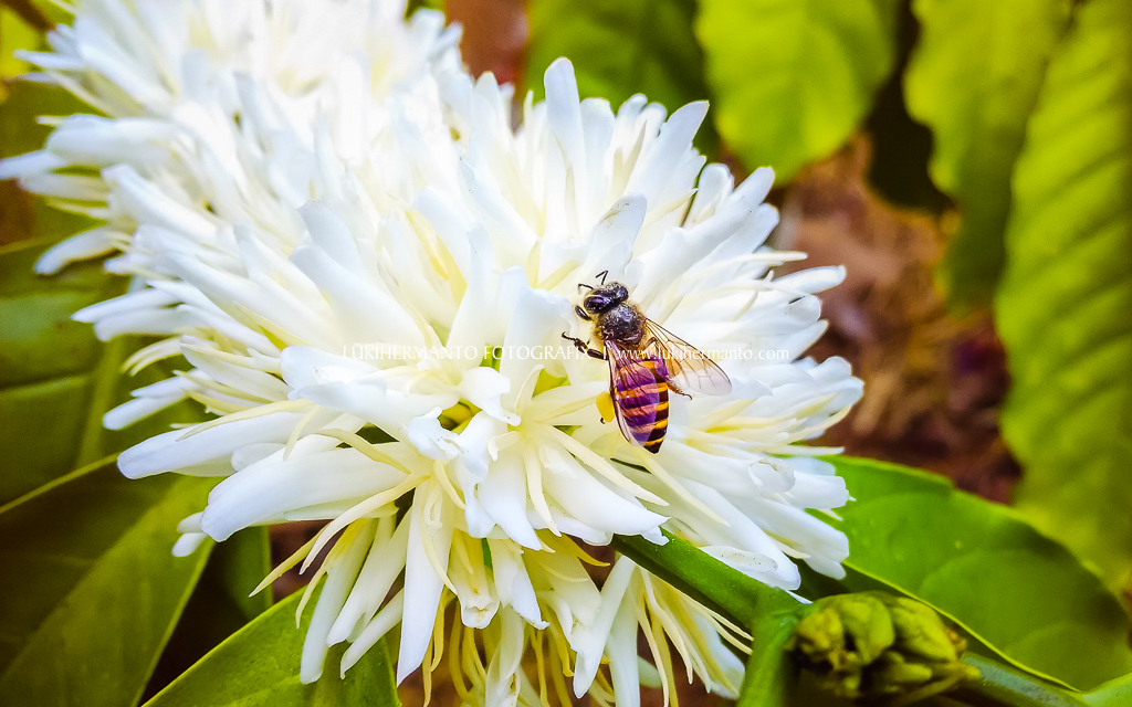 foto macro serangga pake hp xiaomi redmi 1s