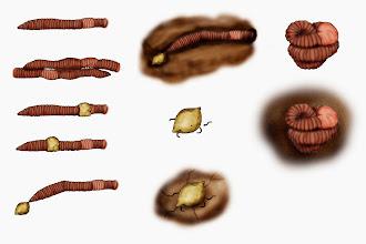 Photo: Regenwurm - Lebenszyklus