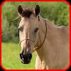 Horse Sounds MP3 2017 APK