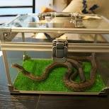 Tokyo Snake Center in Harajuku in Harajuku, Tokyo, Japan