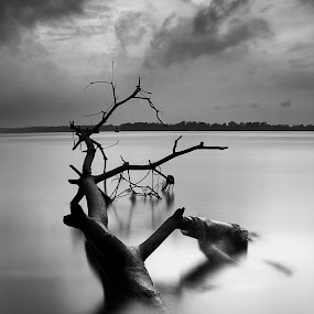 Black and White by Macbrian Mun - Landscapes Waterscapes ( black and white, pwcbwlandscapes )