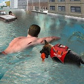 Flood Relief Rescue Dog
