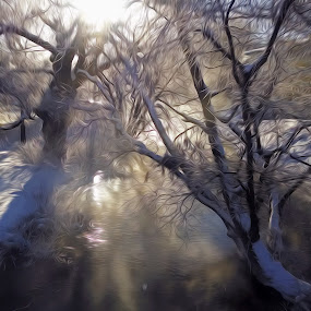 Stream Steam 03 by Kevin Lucas - Landscapes Waterscapes ( stream, winter, cold, fog, snow, trees, kevin lucas, eye statements, mist, steam,  )