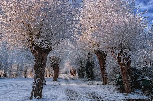 magic winterdrove by Ghislain Vancampenhoudt - Landscapes Forests
