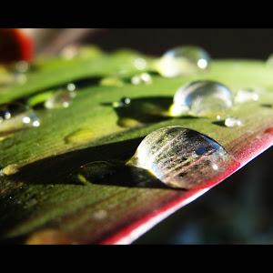 water drop on leaves.jpg
